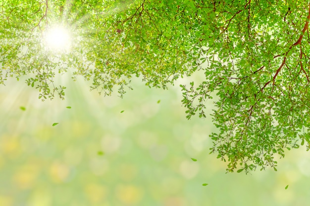 Sunshine through green leaves, nature spring background