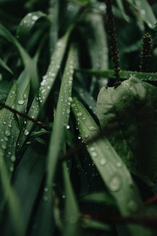A super close up of some green plants in the forest with rain drops over it