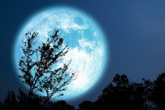 Super grain blue moon silhouette tree in field on night sky, elements of this image furnished by nasa
