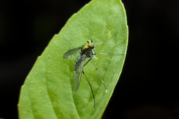 Super macro fly portrait