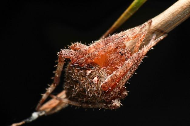 黒の葉の上のクモのスーパーマクロ写真
