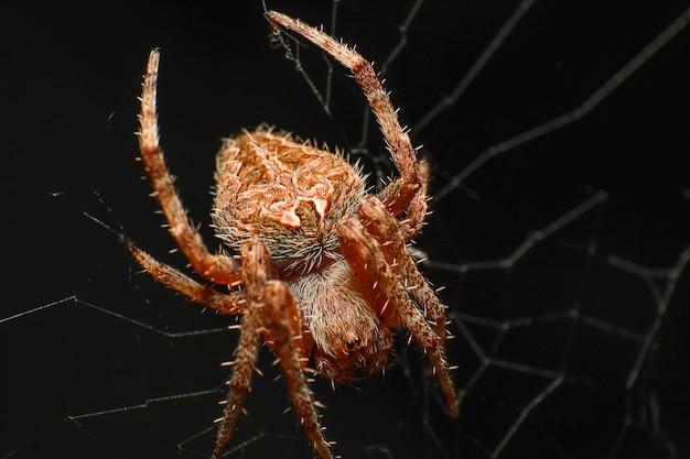 黒に蜘蛛の巣を持つ蜘蛛のスーパーマクロ写真
