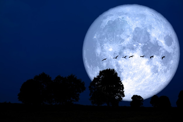 Super snow moon back silhouette bird ontree in field