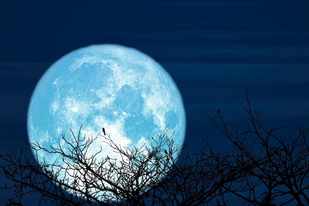 Super sturgeon blue moon and silhouette coconut tree mountain in the night sky, elements of this image furnished by nasa