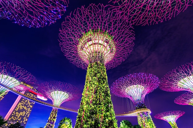 Super tree in garden by the bay