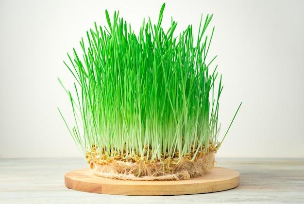 Superfood, 둥근 보드에 녹색 싹이 돋아 난 밀 곡물. 측면보기 복사를위한 공간. 건강 식품의 개념.