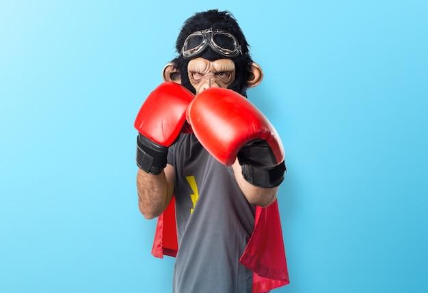 Superhero monkey man with boxing gloves on colorful background