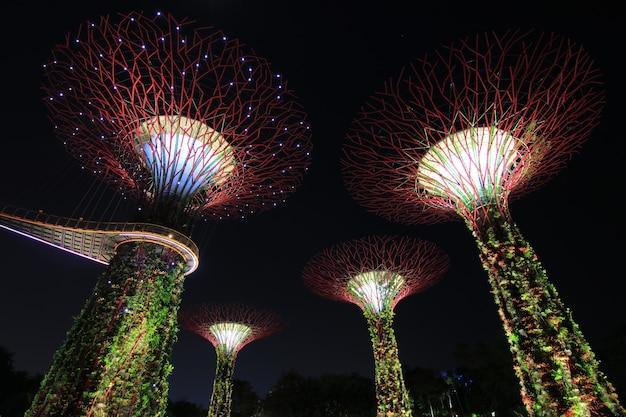 Ночное шоу supertrees gardens у залива природного парка
