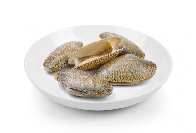 Surf clam in plate on white surface