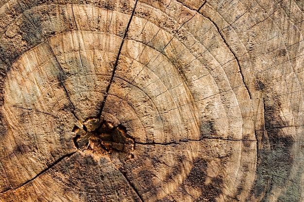 表面の樹皮のテクスチャーを背景としてクローズアップ