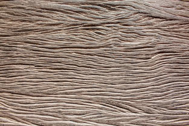 Surface bark texture close up
