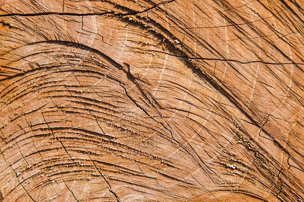 Surface details of the cut tree