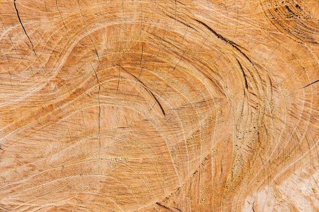 切り取った木の表面の詳細