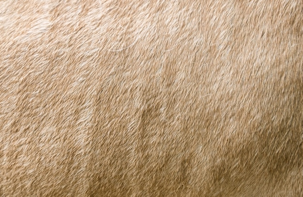 Surface fur cream horse