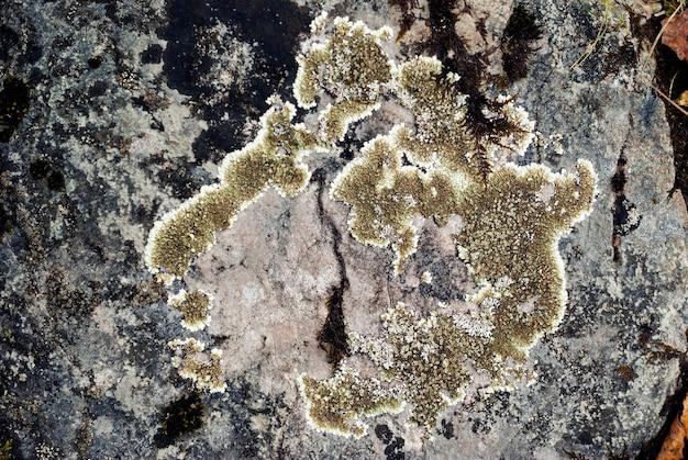 다른 색조의 이끼로 덮인 돌의 표면