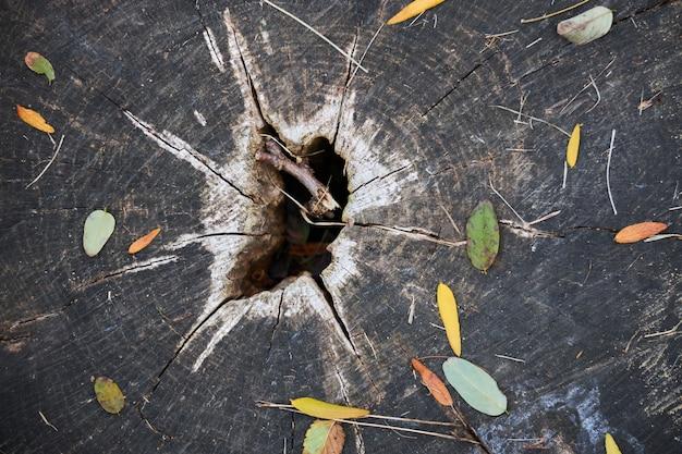 秋の落ち葉で覆われた中央に穴がある古い腐った切り株の表面