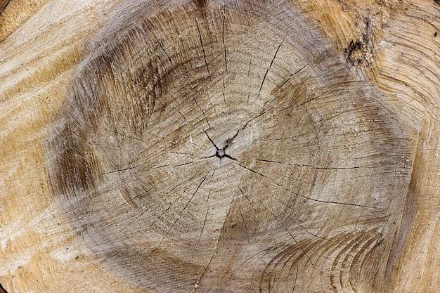 倒れた木の表面