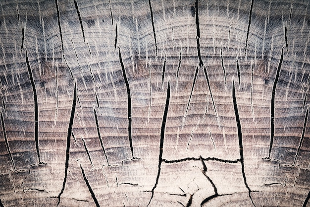 Surface of a wooden stump