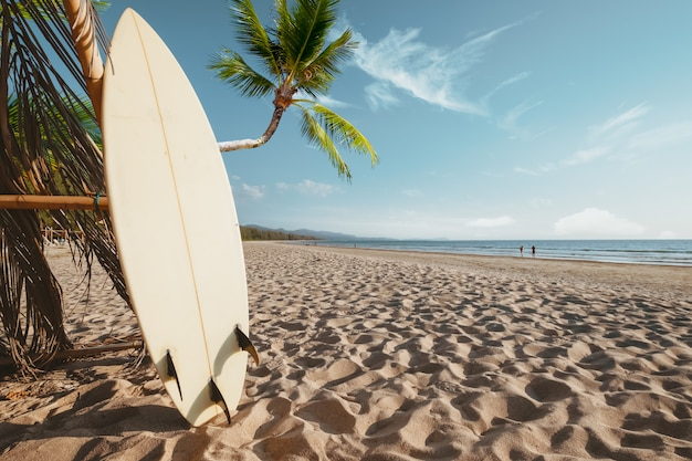 Surfboard and palm tree on beach
