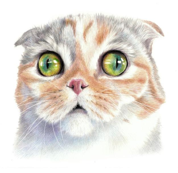 大きな目で驚いた猫。猫の顔のカラースケッチ。白い背景で隔離。鉛筆画アートワーク
