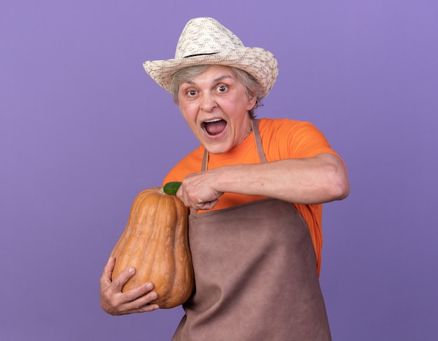 복사 공간이 있는 보라색 벽에 격리된 호박과 오이를 들고 정원 가꾸기 모자를 쓰고 놀란 노인 여성 정원사