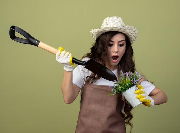 園芸帽子と手袋を身に着けている制服を着た驚いた若い女性の庭師は、オリーブグリーンの壁に隔離された植木鉢の上にスペードを保持します