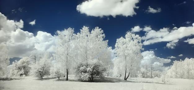 화창한 날에 초현실적 인 적외선 풍경