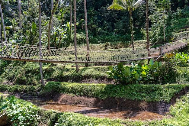 Suspension bridge in the jungle near the rice terraces in island bali, indonesia . nature and travel concept