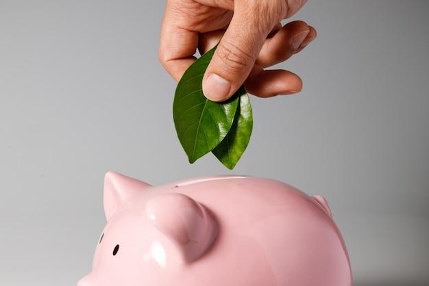 持続可能性とグリーンビジネスコンセプト、貯金箱に緑の葉を置く手
