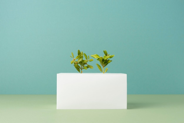 Sustainability concept with blank geometric forms and growing plant