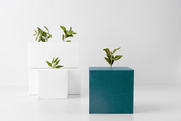 Concetto di sostenibilità con forme geometriche vuote e piante in crescita