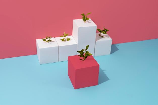 空白の幾何学的形状から成長する植物による持続可能性のコンセプト
