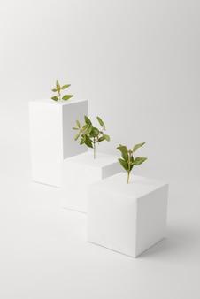 빈 기하학적 형태에서 자라는 식물의 지속 가능성 개념