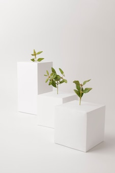 Concetto di sostenibilità con piante che crescono da forme geometriche vuote