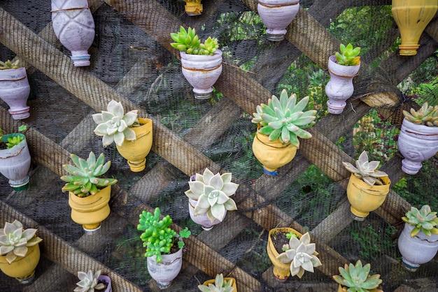 持続可能性、ペットボトルを再利用し、多肉植物を植えるためにそれらを鉢に変える、