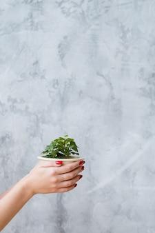 持続可能な発展。概念的な自然保護。手に家の植物を保持している女性。