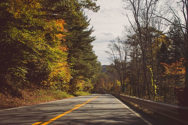 Suunyの日に美しい森の木々の間のまっすぐな道