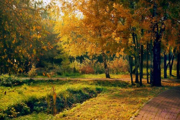 ロシアのsviblovo公園の木の真ん中にある経路の美しいショット