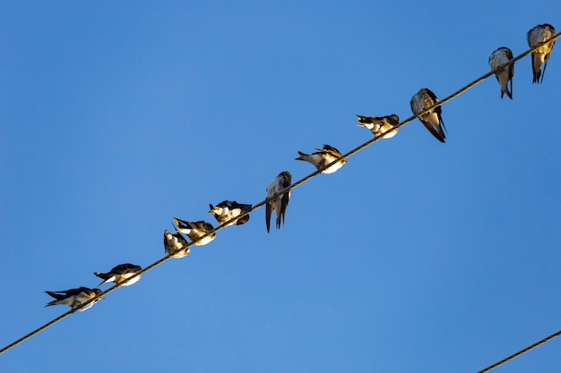 Swallows on top of electrical wiring