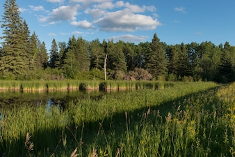 Swamp in a Marsh, Lake Audy Campground, Riding Mountain National Park, Manitoba, Canada