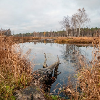 秋に北の沼。ビーバーが水中で倒れた木。
