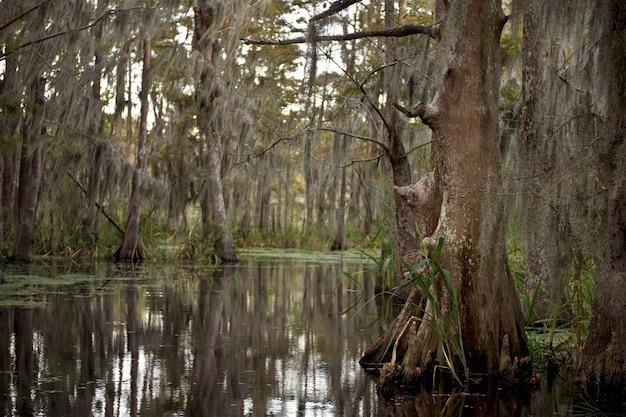 ルイジアナ州ニューオーリンズ近くの沼