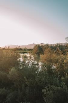 木々に囲まれた沼