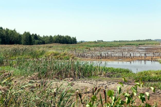 Болото, конец лета - территория, на которой есть болото, конец летнего сезона, беларусь