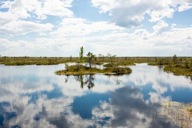 沼。ベラルーシの沼地はヨーロッパの肺です。生態保護区エリニャ。高品質の写真
