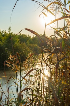 A swampy river against the backdrop of the bright evening sun in summer.