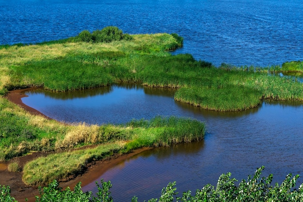 Swampy river bank with clay and thickets of water grass