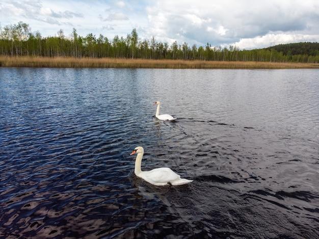 Swan on blue lake water