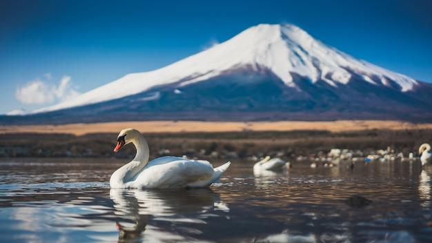 白鳥湖富士山の風景 Premium写真
