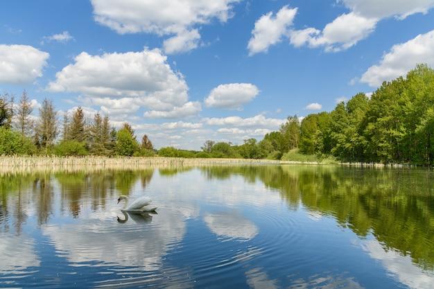 Лебедь на озере с зеркальным голубым небом с белыми облаками